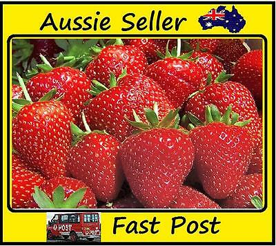 200pcs New Burgundy Strawberry Seeds Planting Nutritious Delicious Fruit Garden