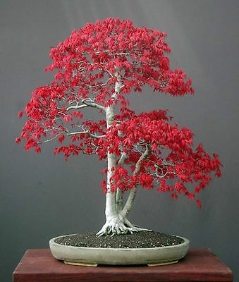 How To Grow Bonsai  Ebook Pdf With Resell Rights