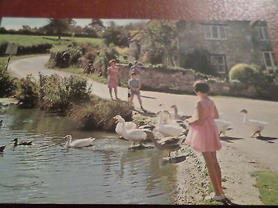 Postcard Feeding Time At The Duck Pond Bembridge Isle of Wight
