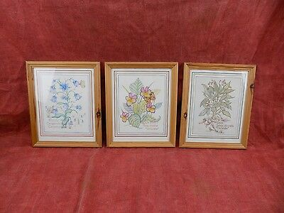 Very fine Original prints of Paintings of flowers and herbs, Attractive set of 3
