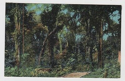 Costa Rica Very Old Postcard Tropical Jungle UNUSED