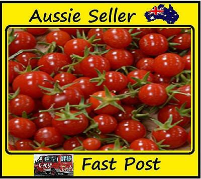 100 Pcs Red Cherry Tomato Seeds Organic Heirloom Easy Grow Garden Plant.