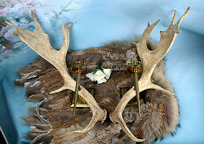 PAIR vintage  HUGE  Antler SCONCES wall lights hunting hunter cabin woods