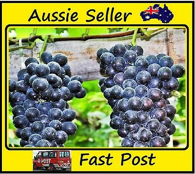 Sweet Black Grape Seeds Easy Grow Home Garden Seed 50 Pcs