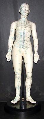 Large Acupuncture Points Model - 47cm High - On Base