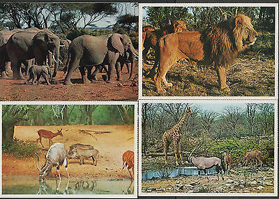 k1931)    4  x  POSTCARDS OF ANIMALS FROM AFRICA