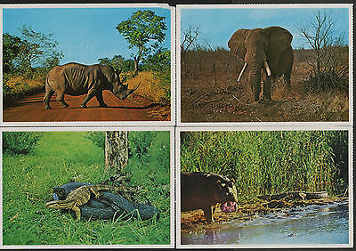 k1923)                    4  x  POSTCARDS SHOWING ANIMALS FROM AFRICA