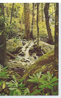 Waterfalls In The Forest - Grandfather Mountain, NC - Vintage Postcard