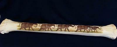 "Giraffe Shin Bone Scrimshaw 30"" Long Rare Detailed Extremely Unusual Genuine"