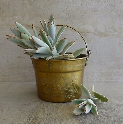 Vintage Engraved Brass Small Bucket Planter Flower Pattern Aged Very Tarnished