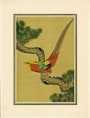 VINTAGE WATERCOLOUR PAINTING ON SILK Signed Bird of Paradise on Pine Japan China