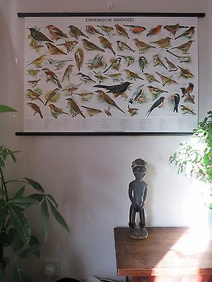 Vintage Pull Roll Down School Wall Chart Poster Of Songbirds Ornithology Birds