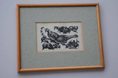 Vintage Old Bird Wood Block Print From Book Doves Or Pigeons?