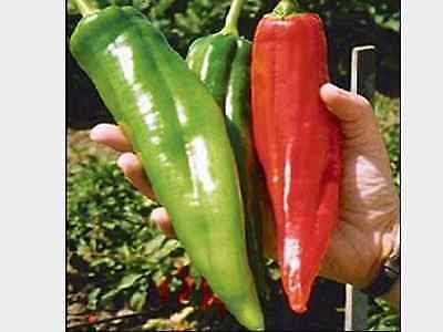 "Capsicum Seeds ""Big Jim"" (30 Seeds) Excellent Large Variety"