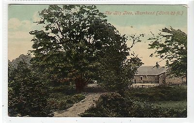 THE BIG TREE, BARRHEAD: Renfrewshire postcard (C22931)
