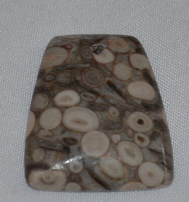 ✿ 30mm Crinoid Fossil drilled focal bead ✿