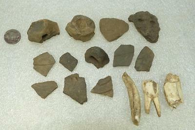 LBK shards with different lugs + animal tooth european Neolithic ca. 5 000 BC