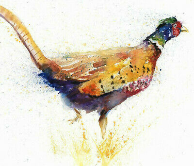 HELEN ROSE Limited Print PHEASANT  wildlife art watercolour painting 337