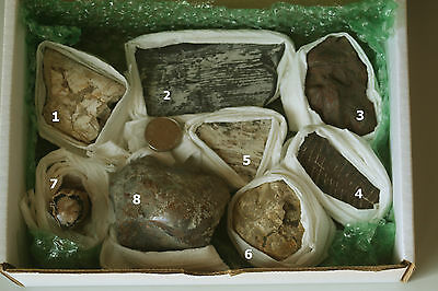 Beginner Fossil Collection