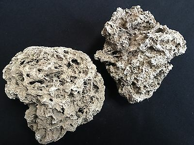 English Tufa Rock Tufa Stone Rare Y ~ Aquarium Fish Tank Alpine Rock Decorations