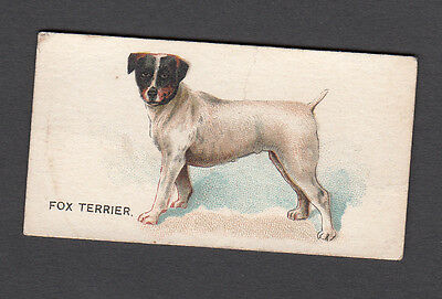 Cigarette card. N163 Goodwin Dogs Of The World - Fox Terrier #22