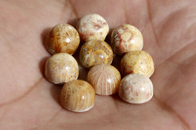 9MM Round Shape, Fossil Coral Calibrated Cabochons AG-236