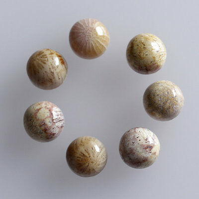 7MM Round Shape, Fossil Coral Calibrated Cabochons AG-236