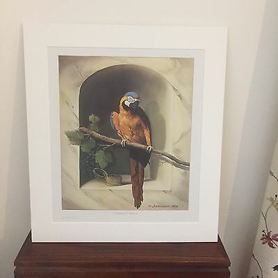 The Perfect Perch  superb parrot limited edition print 18 by 21 ins