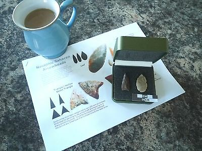 2 x Quality Neolithic Arrowheads in Display Case - 4000BC (W036)