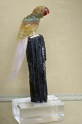 """Fluorite and Amethyst Macaw on Tourmaline51/2""""-Peter Muller"""