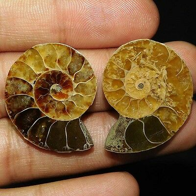 65.35Cts 100% NATURAL TOP AMMONITE PAIR FANCY 30X25 CAB GEMSTONE PI204