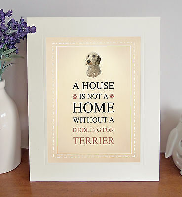 Bedlington Terrier 8 x 10 A HOUSE IS NOT A HOME Picture 10x8 Dog Print Fun Gift