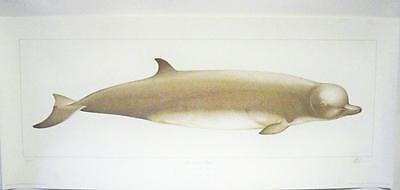Very Limited Edition SIGNED Martin CAMM print of the London Whale 2006