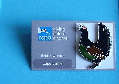 rspb capercaillie stud pin badge charity on original card giving nature a home