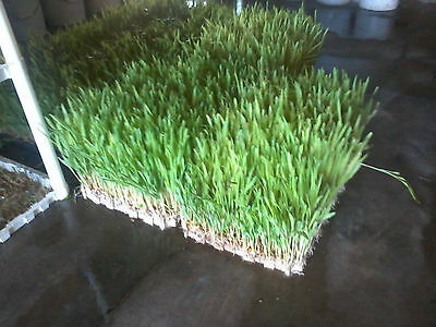 Animal Feed Hay Fodder System Horses Pigs Goats Chickens Cattle Hydroponic