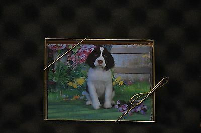 English Springer Spaniel Puppies Note Cards