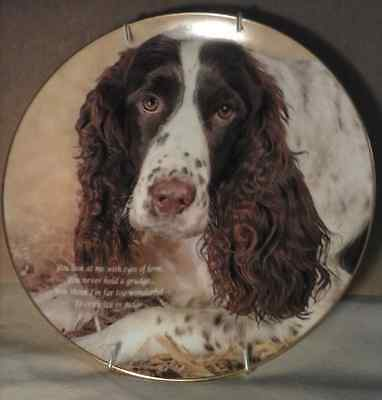 """Springer Spaniel Collectors Plate """"Eyes of Love"""" Danbury Mint A5107+wall holder"""