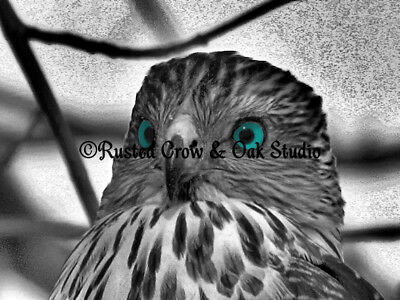 Modern Black White Grey Hawk Bird Teal Eyes Cottage Chic Matted Picture USA A165