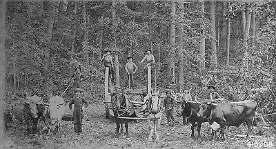 Photograph of Logging Scene, Fremont, Michigan, Early 1900's, Loggers Old Photo