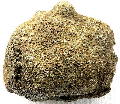 Michigan Favosite - Honeycomb Coral Fossil - 1+ Lbs - Charlevoix Stone - Rough