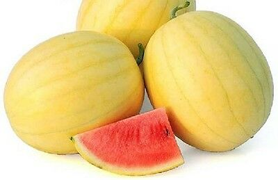 A 0.5g (appr. 8) exotic watermelon seeds ZLOTO WOLICY extremely rare Polish var.