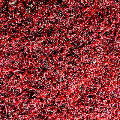 Live Bloodworm (Small Size)