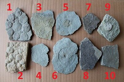 Collection of Precambrian fossils from Ukraine, 10 pieces