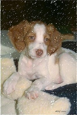 Olde Time Mercantile - Brittany Spaniel Puppy Dog Portrait Matted Art Print