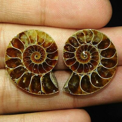 47Cts 100% NATURAL CHARMING AMMONITE PAIR FANCY 27X23 LOOSECAB GEMSTONE PI219