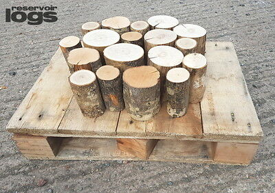 The Little Box of Decorative Display Logs Kiln Dried Ash Hardwood Round 12cm lon