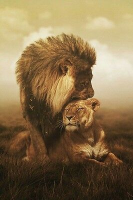 LION AND LIONESS SERPIA  ART IMAGE A4 Poster Gloss Print Laminated
