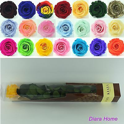 Yellow Rose Preserved 100% Fresh Natural Real Flower last for appr 3 years