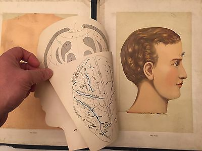 Physicians Anatomical Aid 1880s Chromolithographs Anatomy Book Knox & Graham