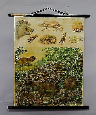 antique (pull-down) school wall chart - scenery with hedgehogs  e5252